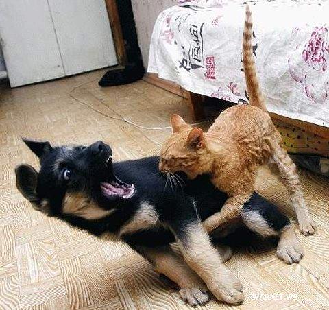 catvsdog.jpg